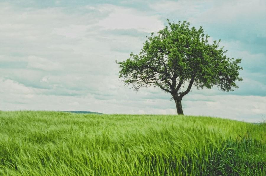 écologique, biologique